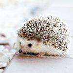 趣味と言えるかわかりませんが小動物を眺めるのが好きです