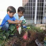 家庭菜園がオススメ!自分で育てた野菜を食べよう!